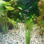 Premier aquarium
